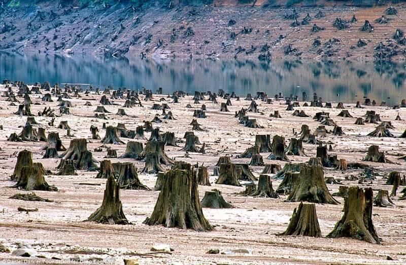Šis daugiametis miškas Oregone buvo iškirstas naujai dambai įrengti.