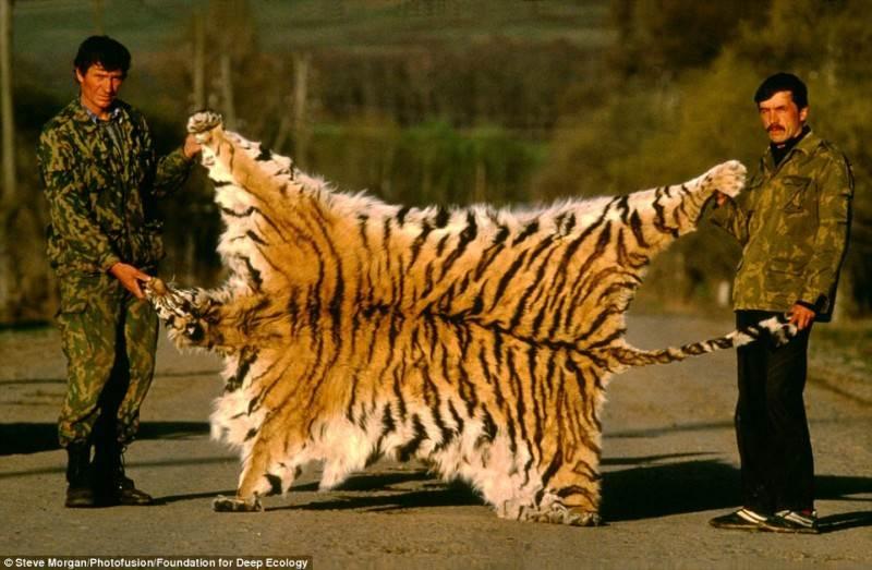 Brakonieriai išdidžiai pozuoja su Sibiro tigro kailiu.