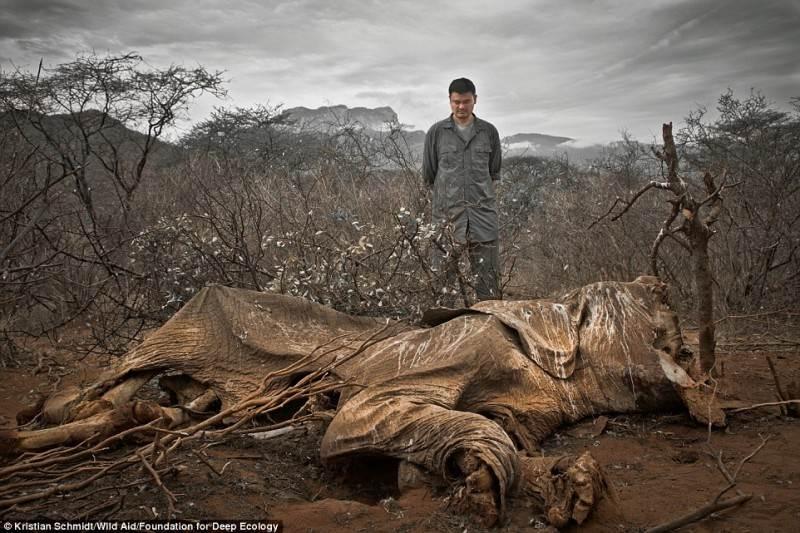 Brakonierių nužudytas dramblys. Jie tiesiog paliko jį pūti.