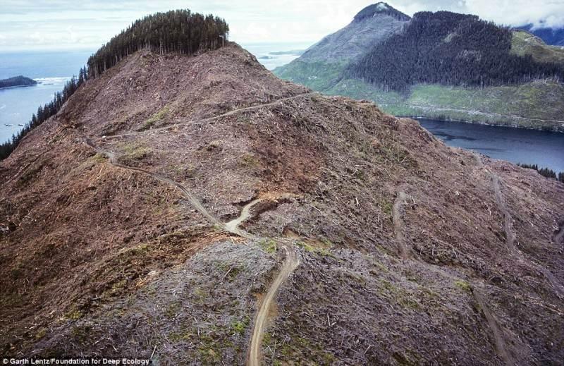 Braziliškų tropinių miškų bausmė pasiekia ir Kanados miškus.