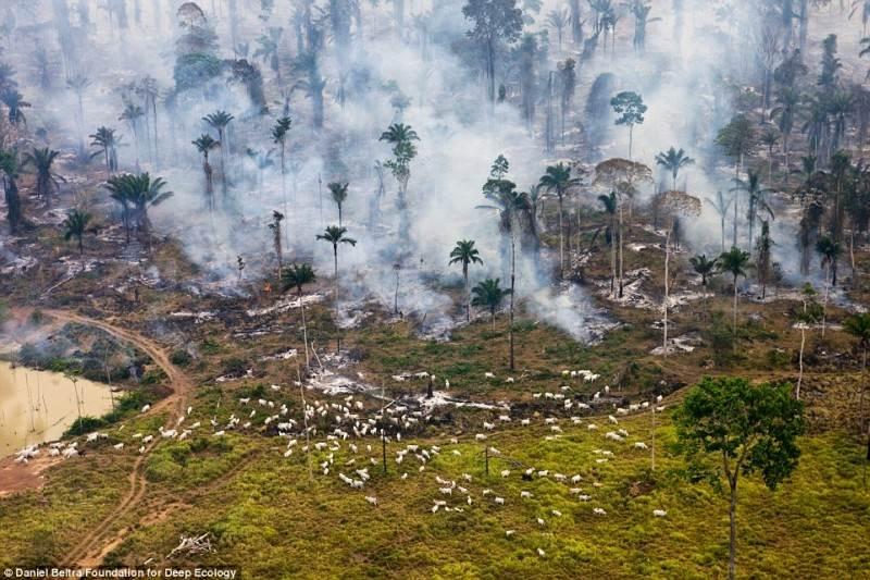 Gaisras tropiniame miške. Kažkada čia gyveno laukiniai ožiai.