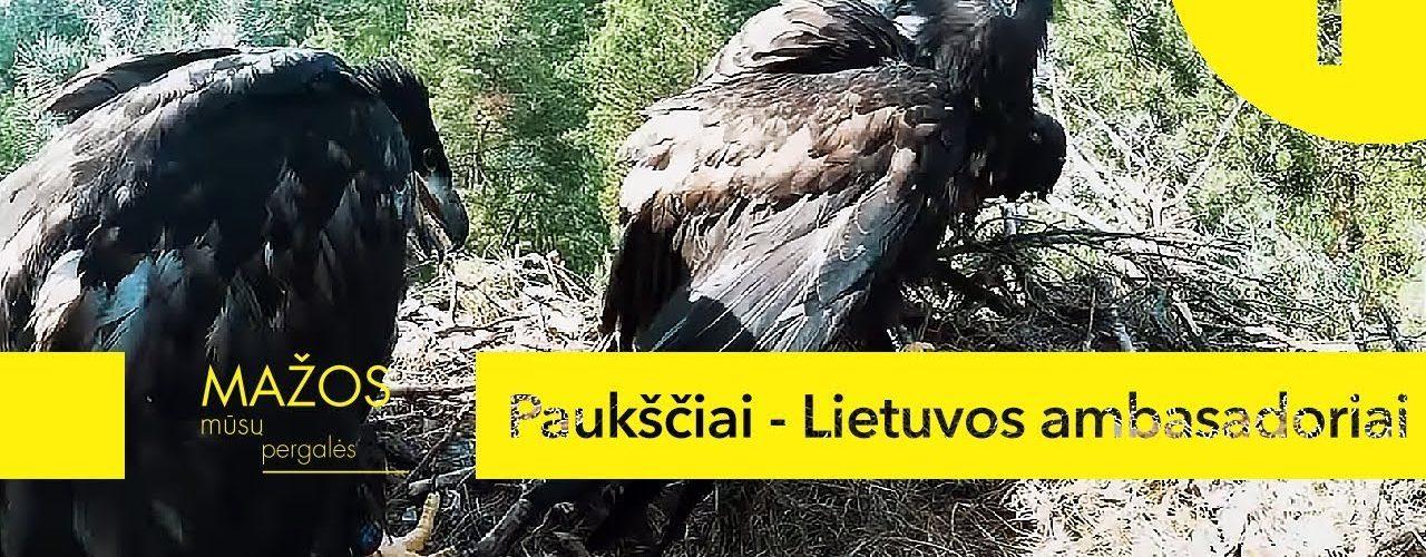 Paukščiai - Lietuvos ambasadoriai || Mažos Mūsų Pergalės || S02E01